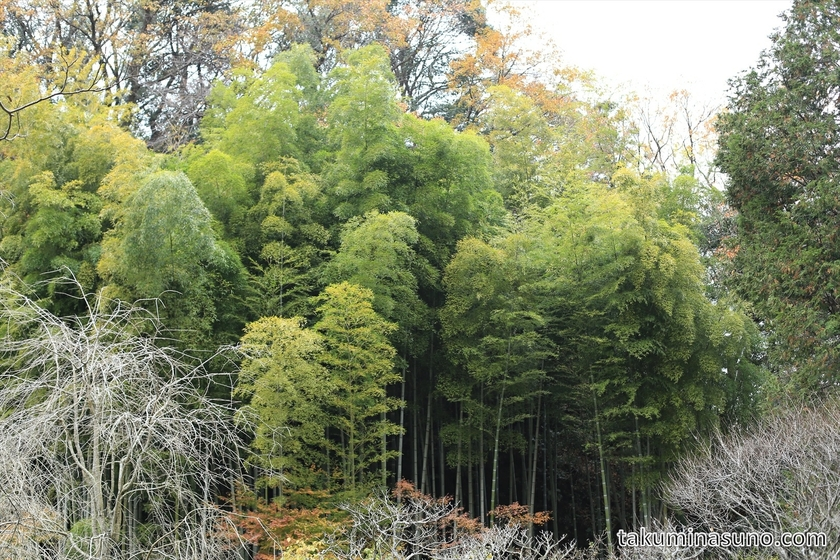Bamboos of Meigetsuin Temple
