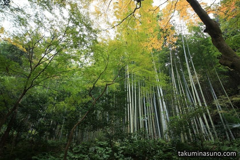 Bamboos of Zuisenji Temple