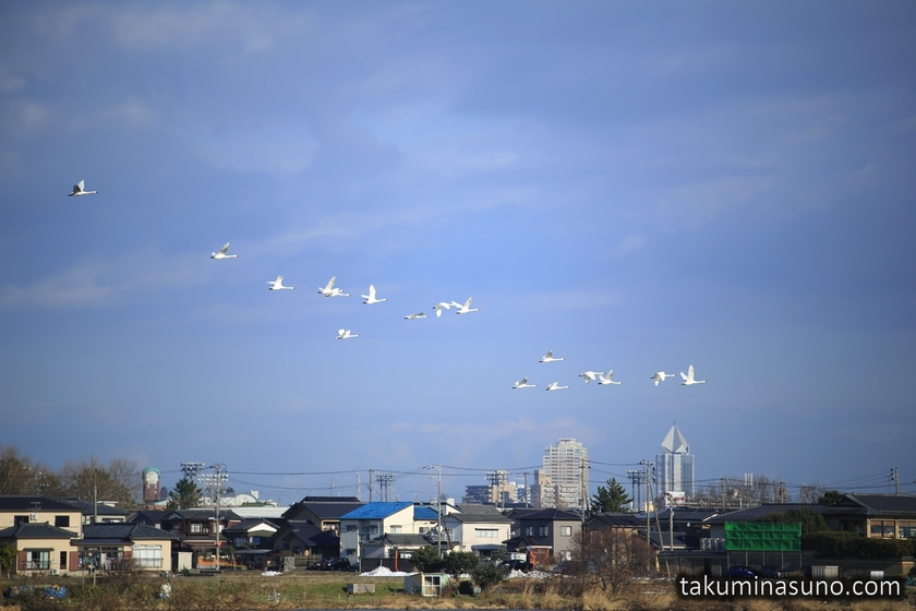 Birds over Lake Toyanogata