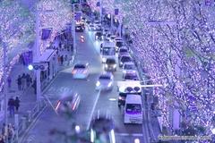 Illuminations of Keyakizaka Street, a Symbol of Roppongi in Winter!