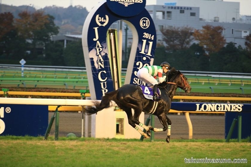 Epiphaneia Won the Japan Cup 2014