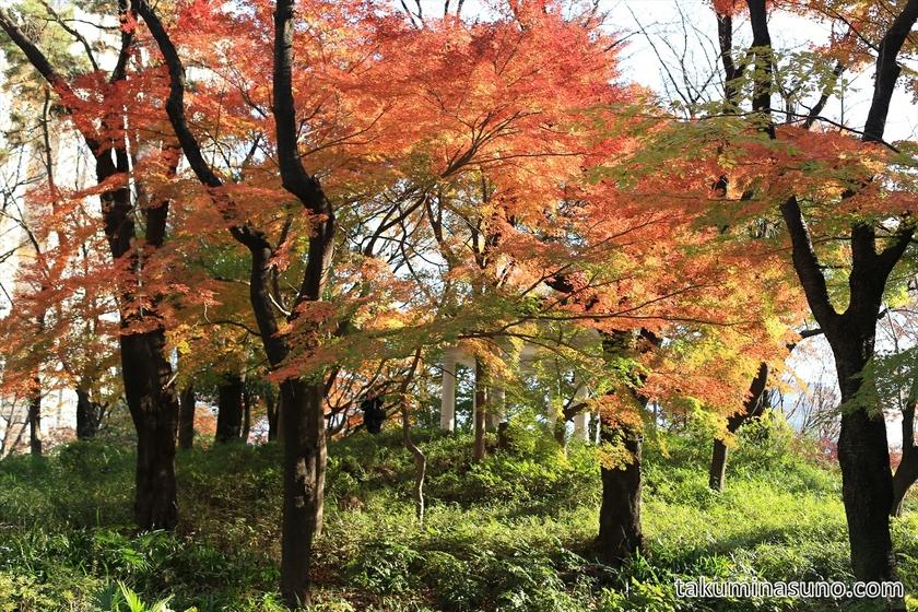 Fujimidai Full of Japanese Maple Leaves