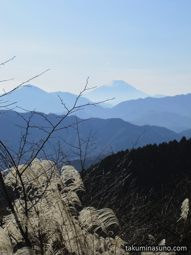 Japanese Pampas Grass and Mt Fuji