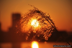 Photo Exhibition 2014 - Kaleidoscopic Beauty of Japanese Pampas Grass (14 Photos)