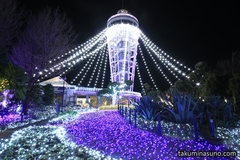 Three Major Winter Illuminations in Kanto - Jewelries of Shonan in Enoshima Island