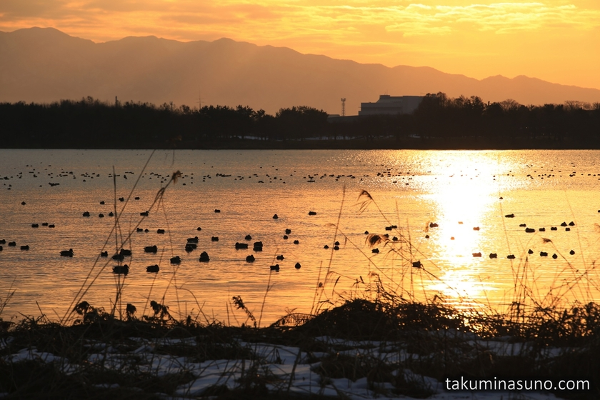 Orange Lake Toyanogata in Niigata