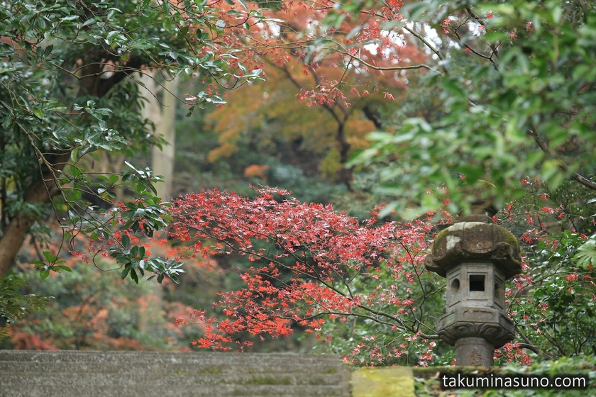 Red Leaves of Moriyoshi Shinno Grave