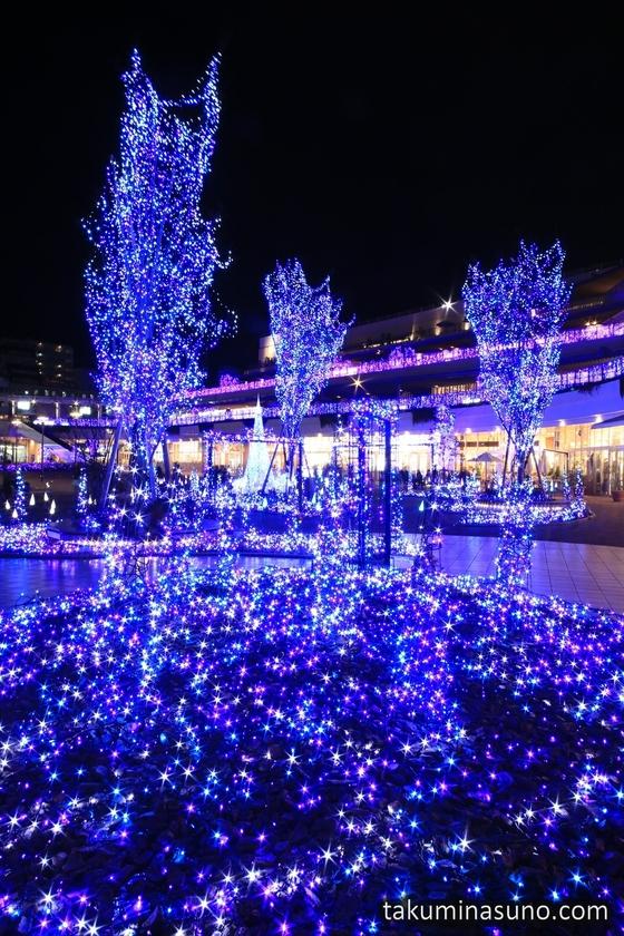 Sparkling Grass of Terrace Mall Shonan