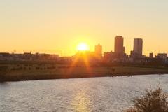多摩川沿い、陽射しになびくススキです