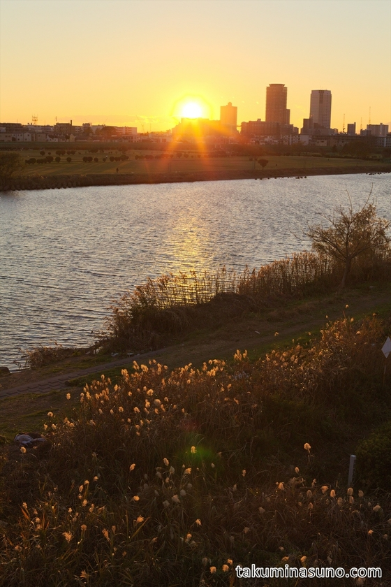 Sunset and Japanese Pampas Grass at Tama River
