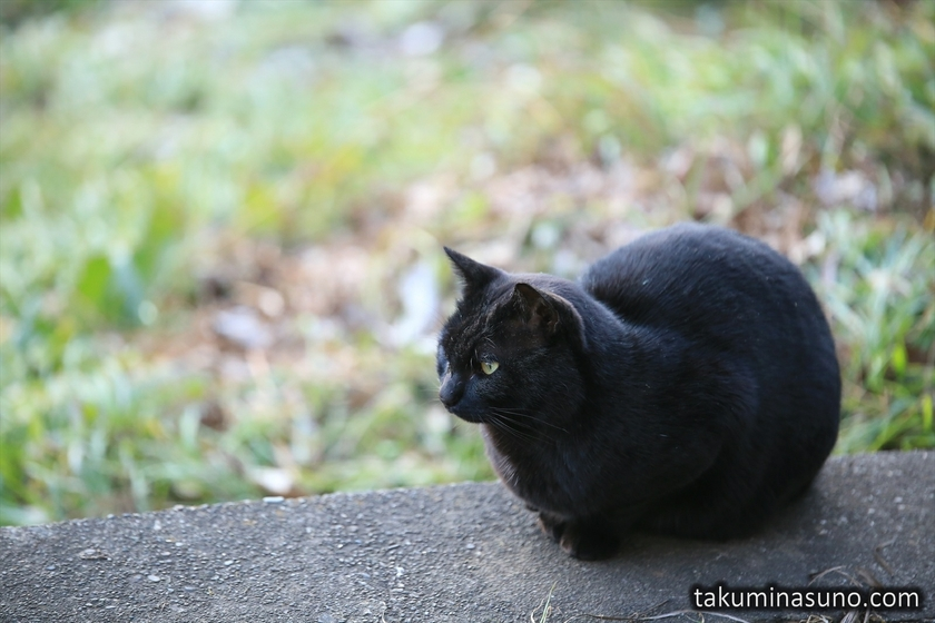 Black Cat at Futako-Tamagawa