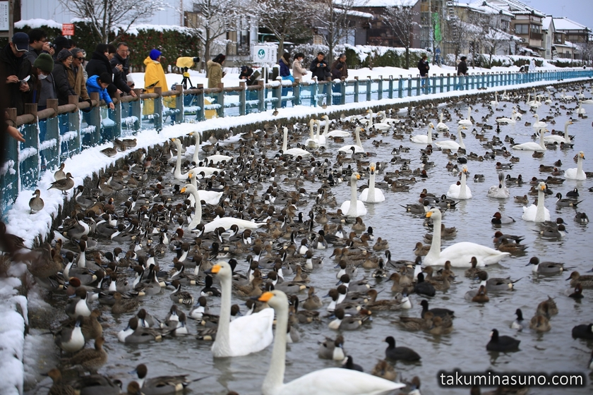 Feeding Birds at Lake Hyoko