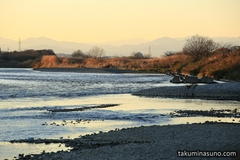 Various Subjects of Photography Found in the Winter of Futako-Tamagawa (8 Photos)