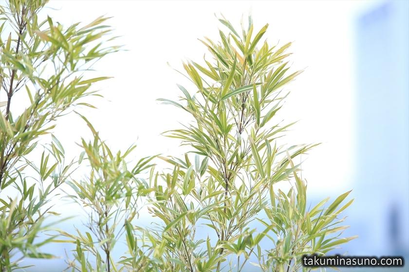 Green Plants near Tama River