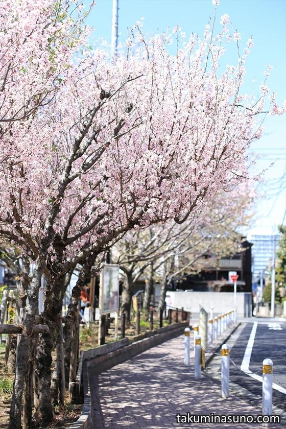 From the Outside of Honmachi Sakura Park