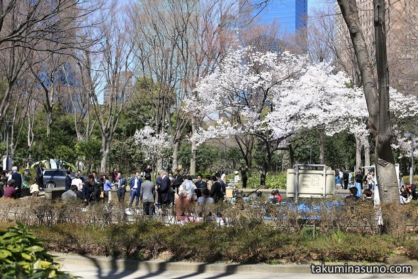 Hanami People at Shinjuku Celtral Park