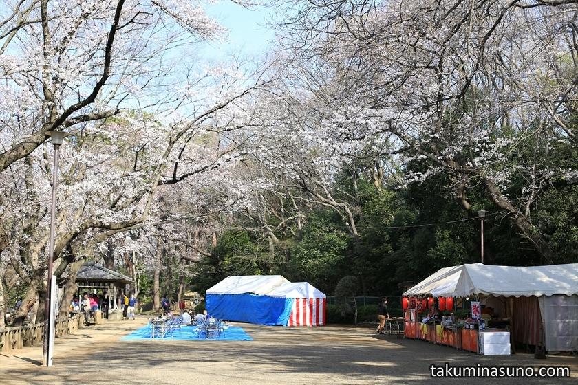 Hanami Place at Tamagawadai Park