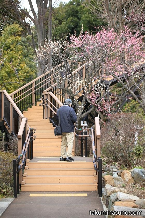 Stairs at Ikegami Baien Plum Garden