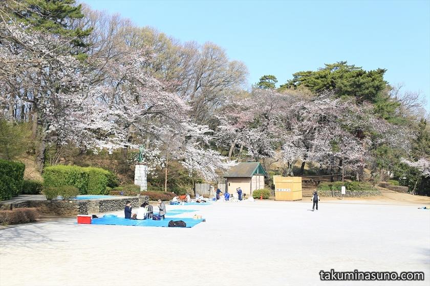 Tamagawadai Park with Sakura Trees