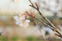 Record of March Colors Found at Tama River - Various Flowers Tell the Arrival of Spring