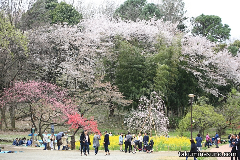Colorful View at Mitsuike Park