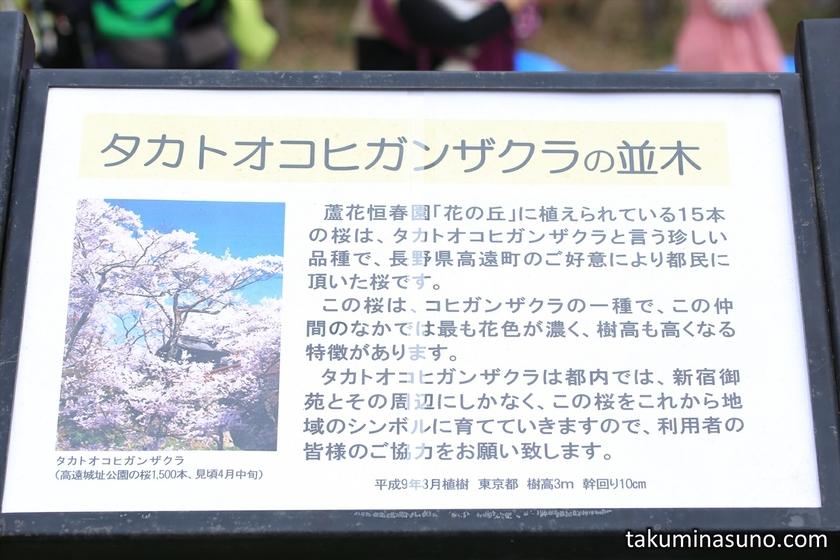 Explanation Board of Takato Kohigan Zakura