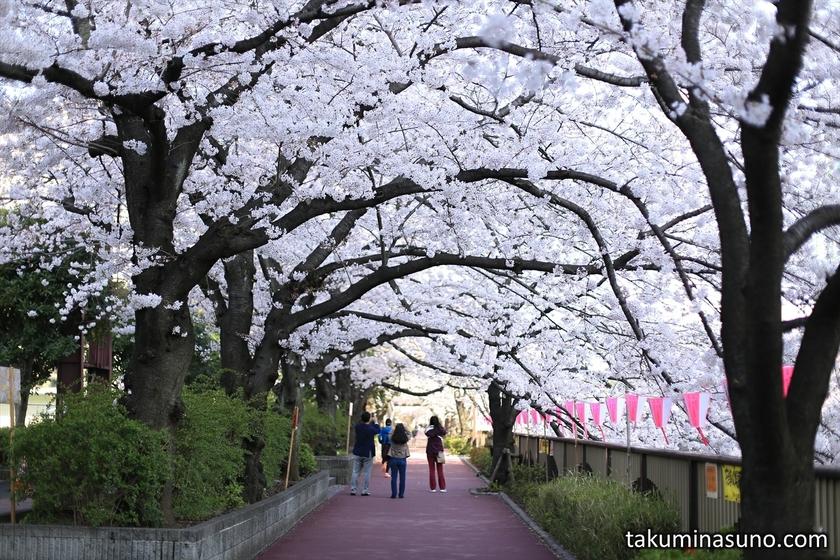 Fondly-remembered Sakura Street along Megro River
