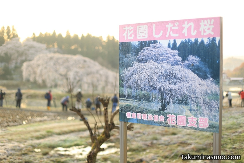 Signboard of Weeping Sakura Tree of Hanazono at Tanagura Town