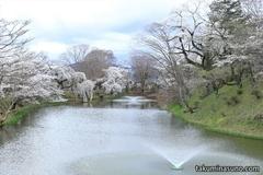 Sakura Report 2015 - Floral Town of Tanagura, A Hidden Sakura Spot in Fukushima Prefecture