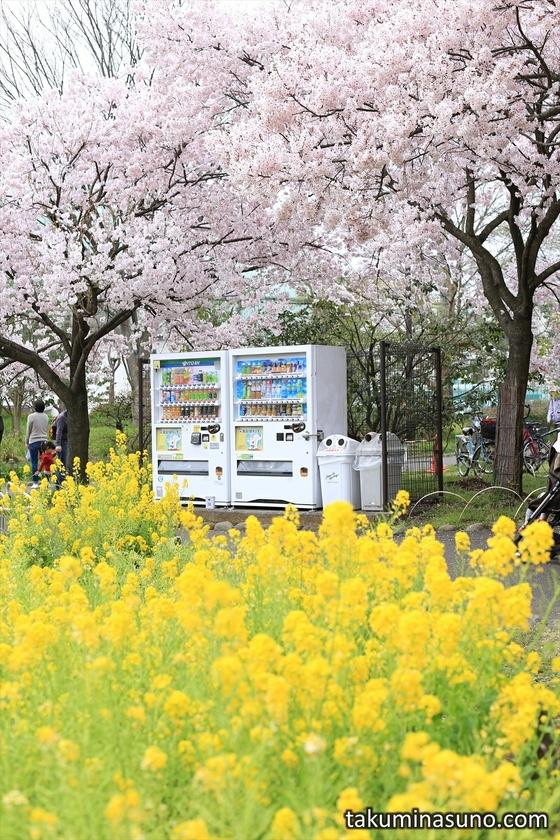 Vending Machine at Roka Koushun-en Park