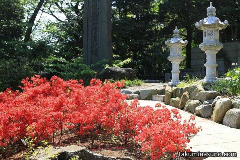 Azalea Flowers at Sojiji Temple