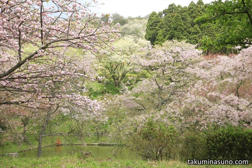 Colorful Blossoms at Saimyoji Temple Historic Park
