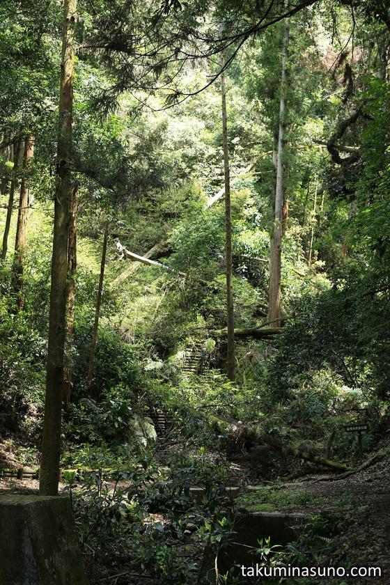 Deep Forest to Saimyoji Temple Historic Park