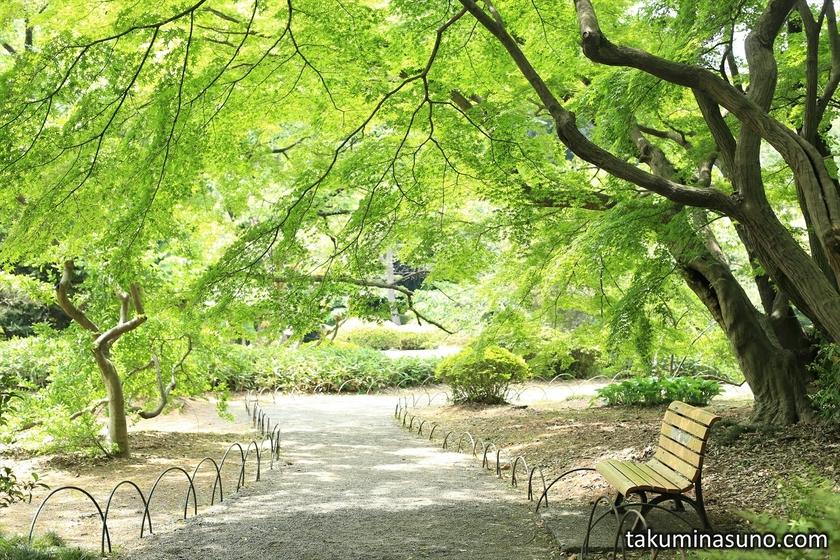Fresh Green Roof of Shinjuku Gyoen National Garden