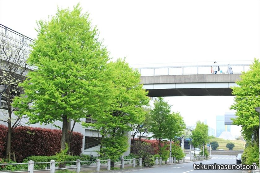 Fresh Green at Odaiba