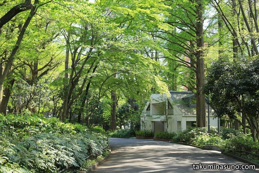Fresh Green at Shinjuku Central Park