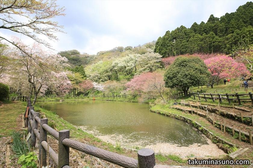 Pond at Saimyoji Temple Historic Park