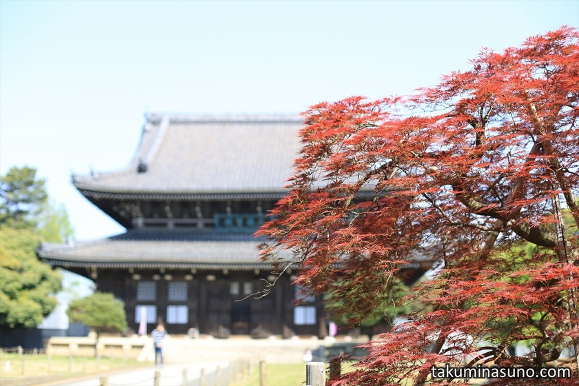 Red Spring Maple Leaves at Sojiji Temple