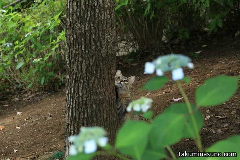 Cat at Tamagawadai Park