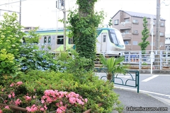 Train Runs along Colorful Bush on Tokyu Tamagawa Line