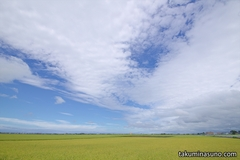 Decreasing paddy fields - I found a clear change in former Kurosaki Town this summer