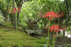 The Pretty Three Guardian Deities of Children are Surrounded by Lycoris Radiata at Hasedera Temple in September - Scenery Changes Every Season!