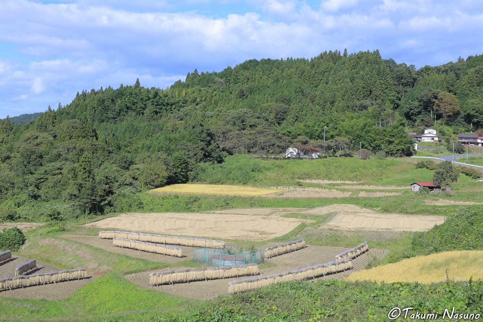 Paddy Fields from Fukuoka District of Tanagura Town