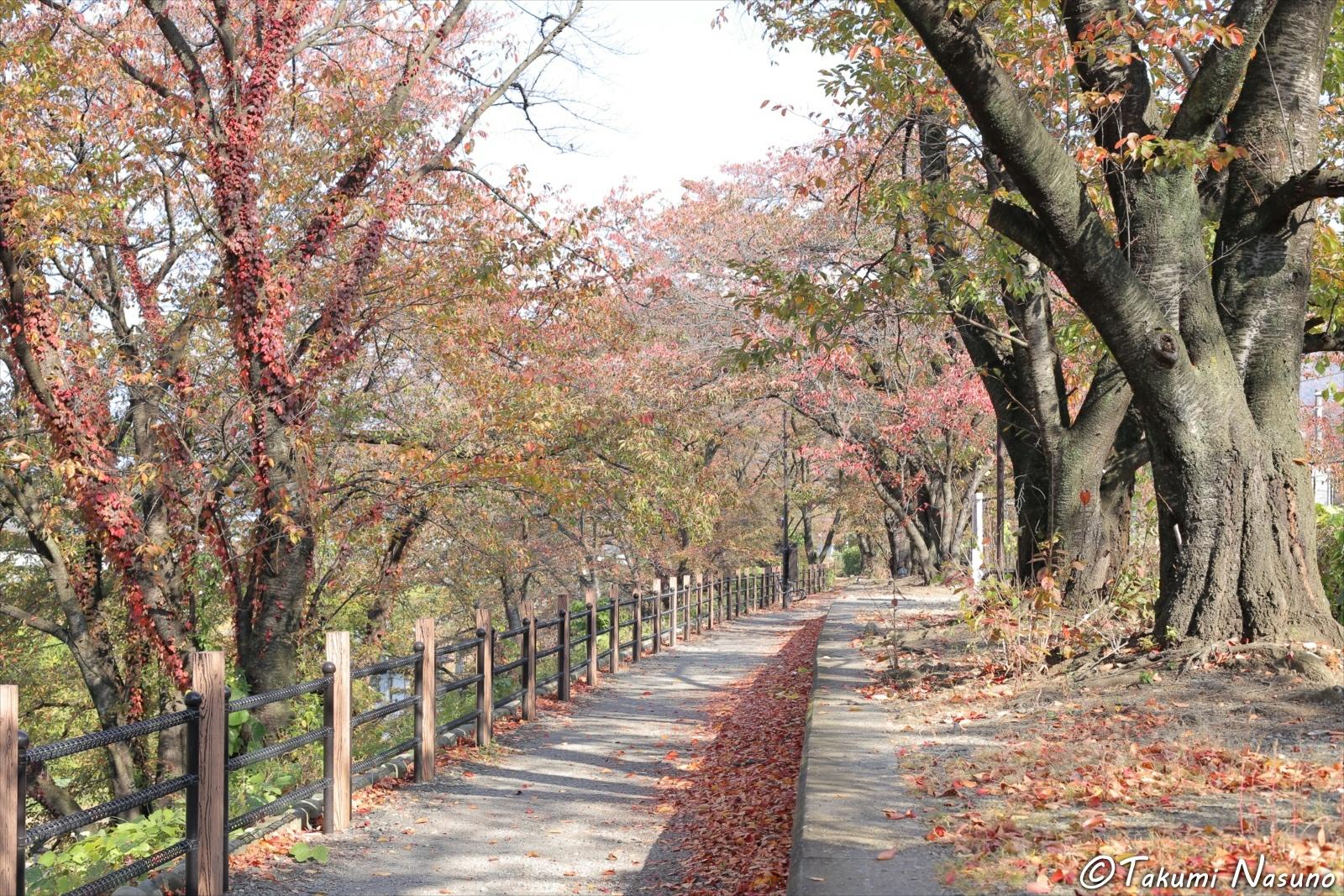 Autumn Colors near Katsunuma Budoukyou Station