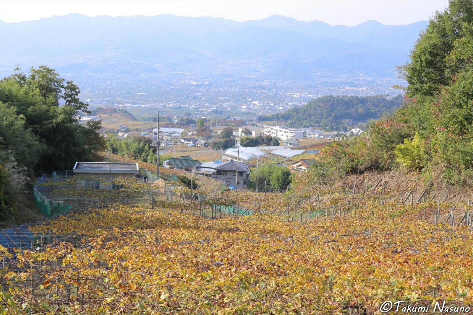 Vineyards of Katsunuma from Hill