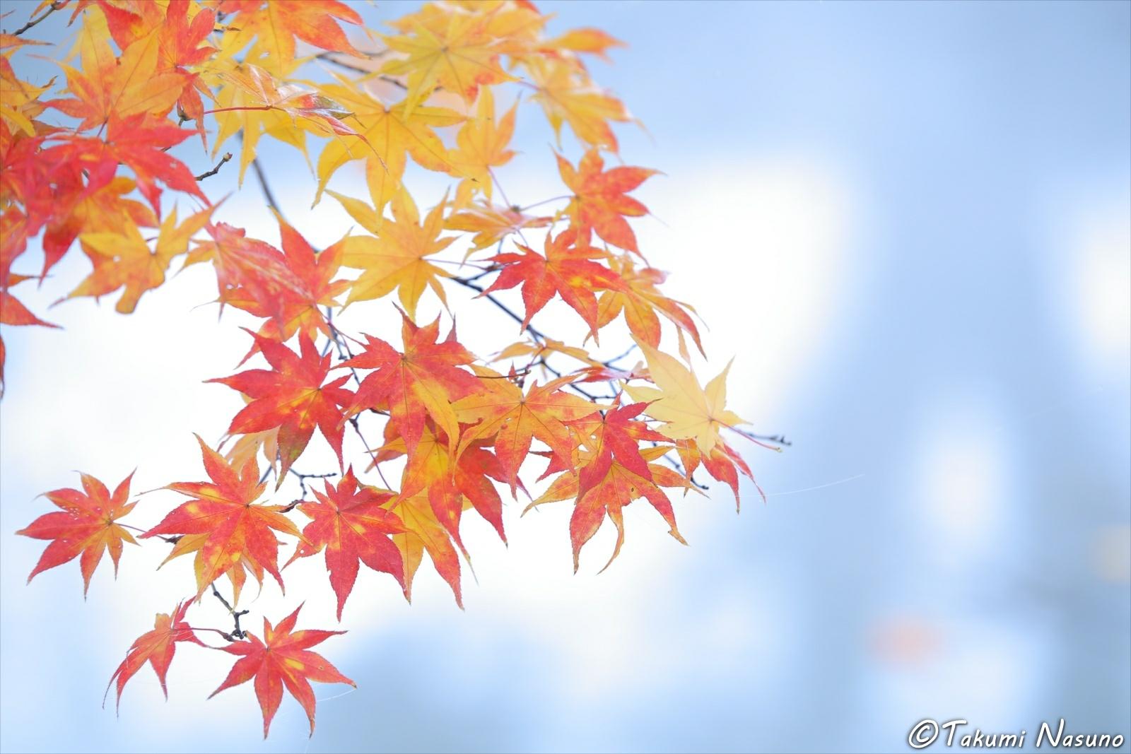 Autumn Colors at Tanagura Town