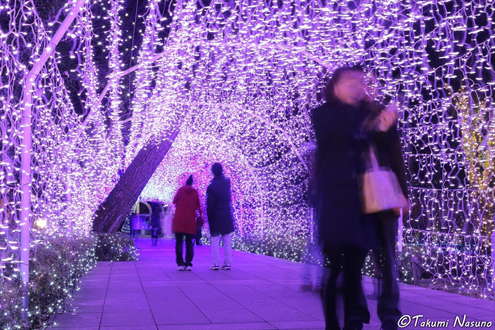 Illumination of Wisteria at Enoshima Island