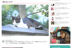 Clipping the copy of my photos of cats on some summary websites