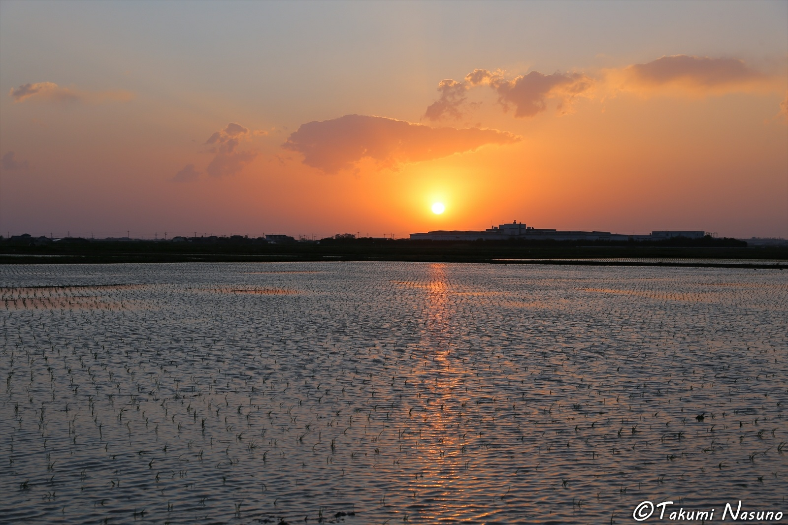 Sunset over Paddy Fields of Niigata