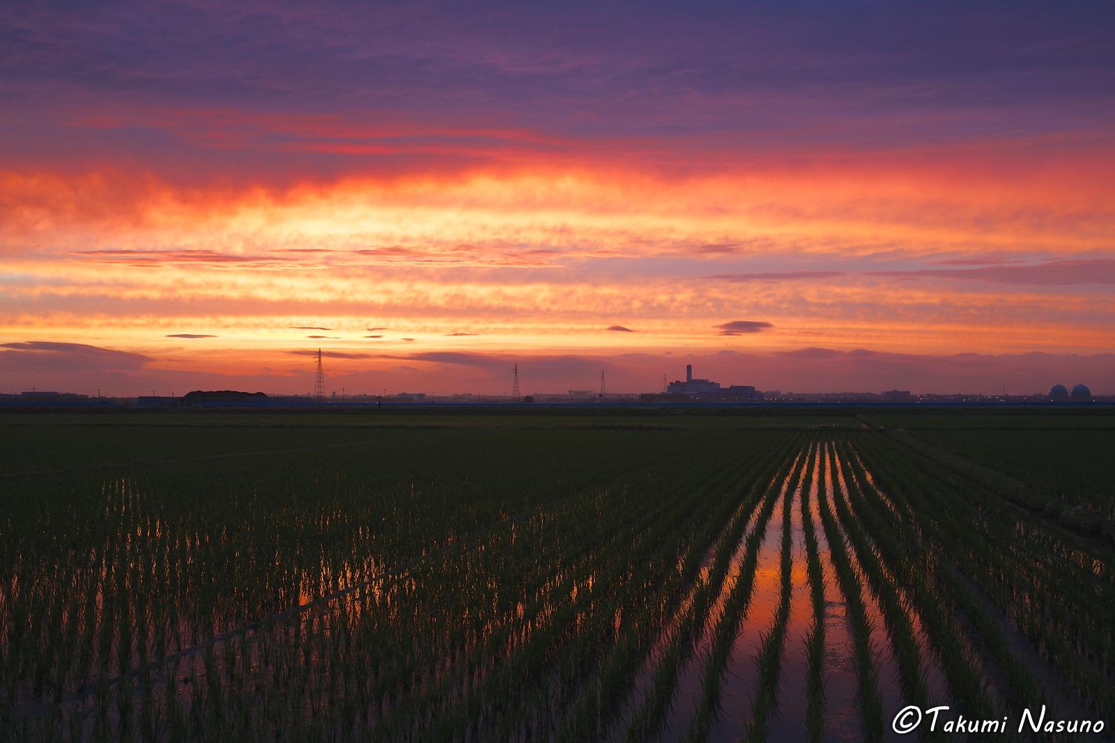 Dusk over Paddy Fields of Former Kurosaki Town